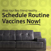 Routine Pet Vaccinations Wall Decal, Veterinarian Wall Decor